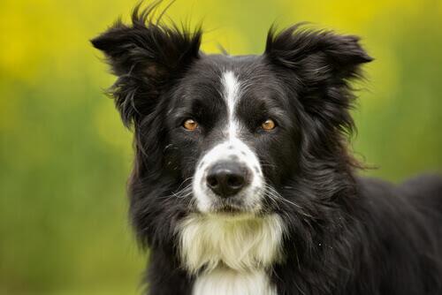 Cachorro últimas