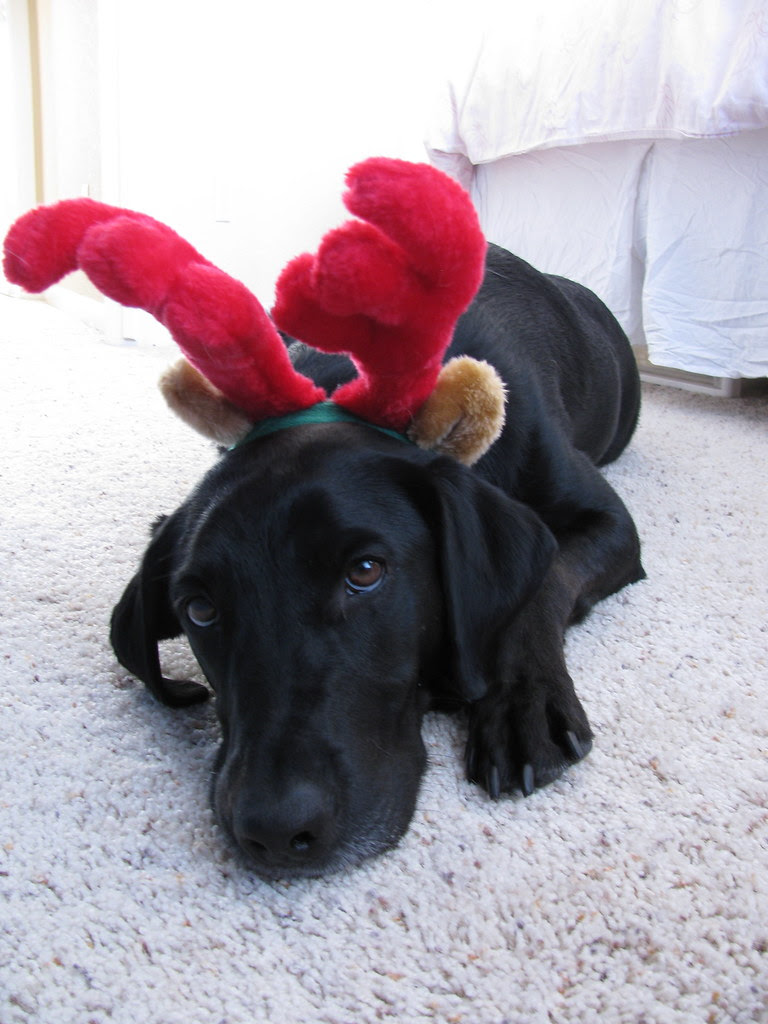 Henry the reindeer.