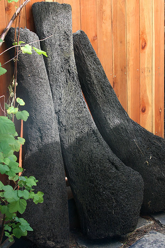 palm trunks