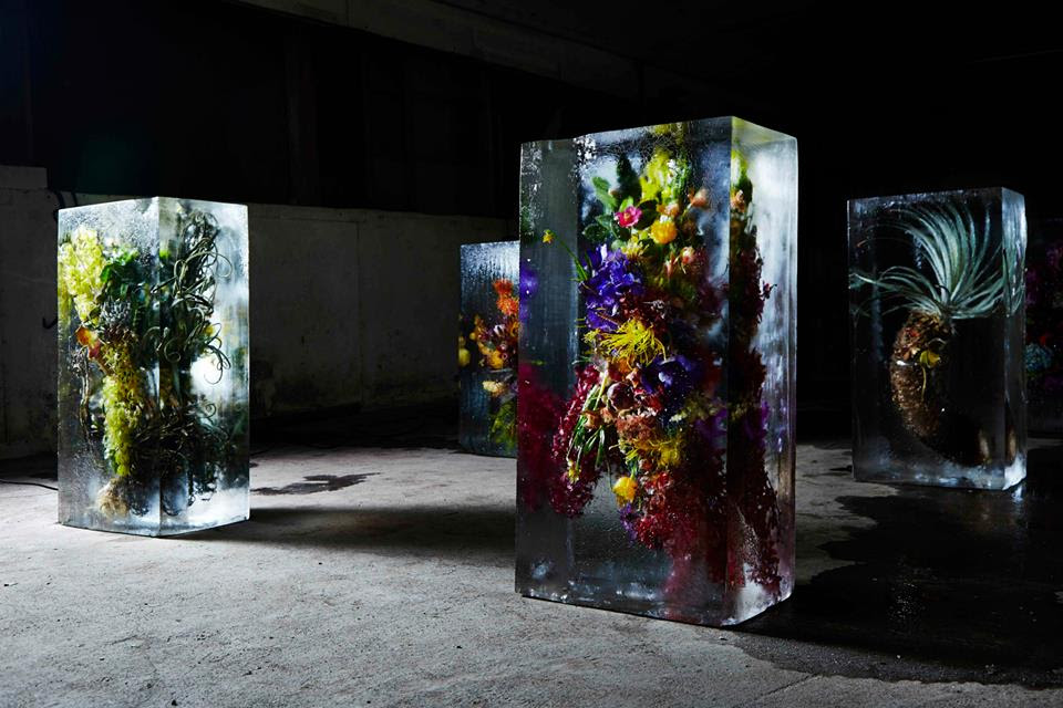iced-flowers-makoto-azuma (6)