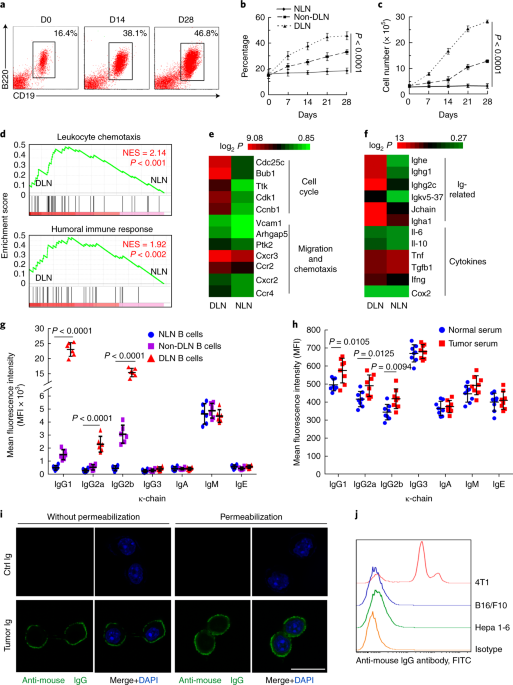 Tumor-educated B cells selectively promote breast cancer lymph node metastasis by HSPA4-targeting IgG | Nature Medicine