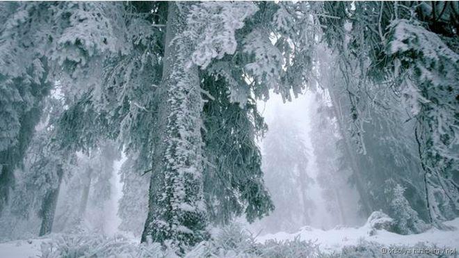 Cinco curiosidades científicas sobre as árvores de Natal