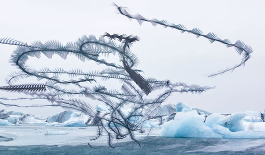Xavi Bou Traces The Invisible Flight Patterns Of Birds