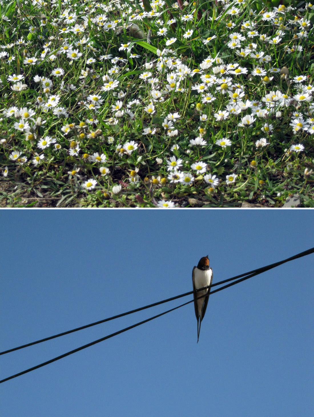 Primavera // Spring