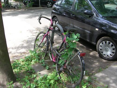 Fahrrad mit beginnendem Hopfenbewuchs