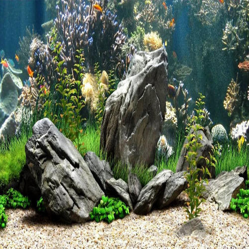 Unduh 560 Background Aquarium Cost HD Gratis