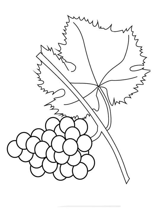 Disegno Da Colorare Grappolo Duva Cat 26024