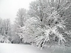 Snow_4111