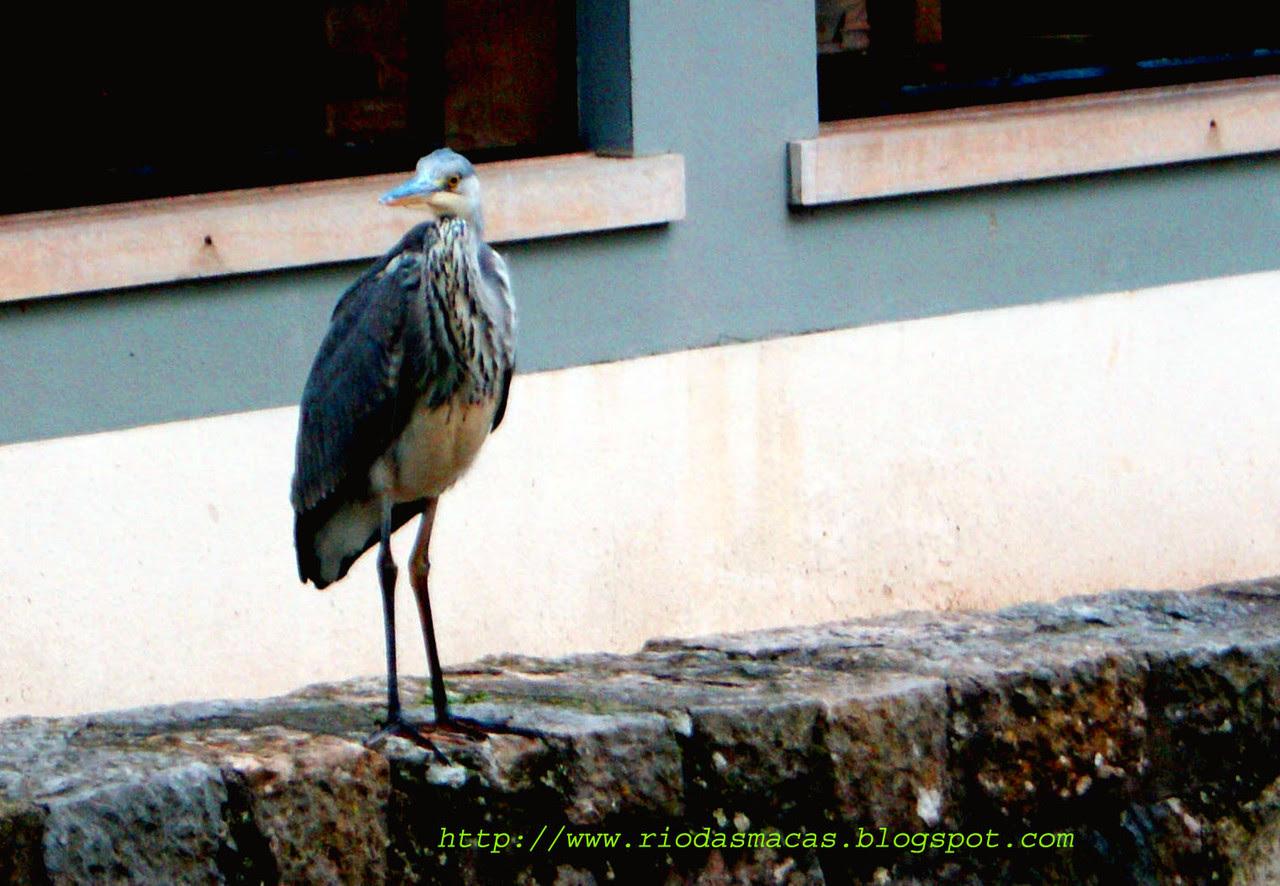 Garça2221112014hblog.jpg