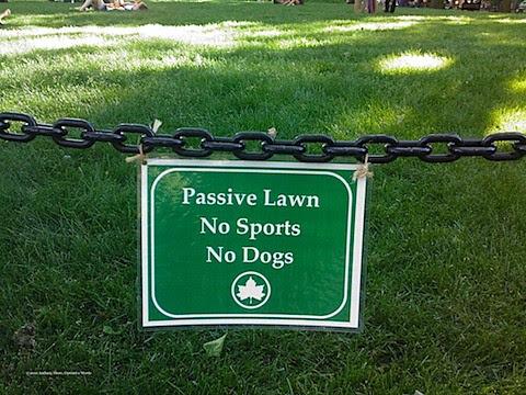 passive lawn-c.jpg