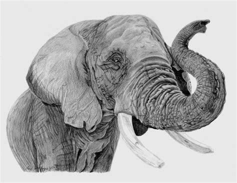 pencildrawingofanelephant african elephant pencil