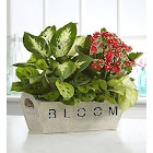 1-800 Flowers Bloom Dish Garden - Plants