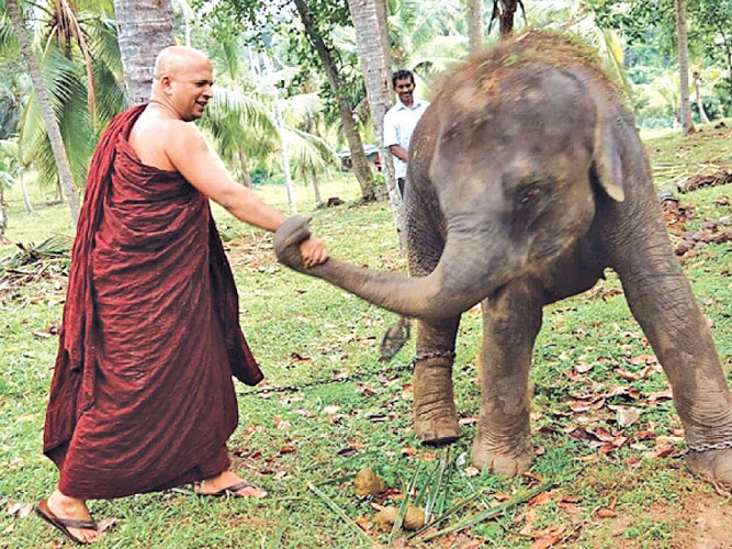 Dhammaloka Thera allowed to travel abroad for five weeks