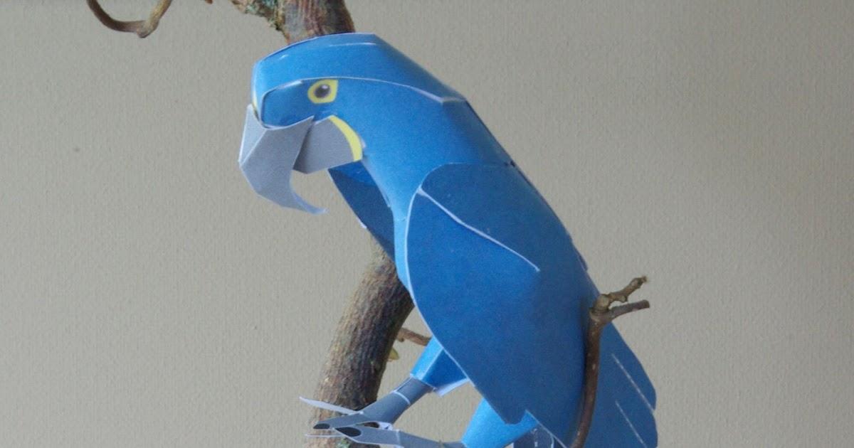 37 papagei basteln vorlage  besten bilder von ausmalbilder
