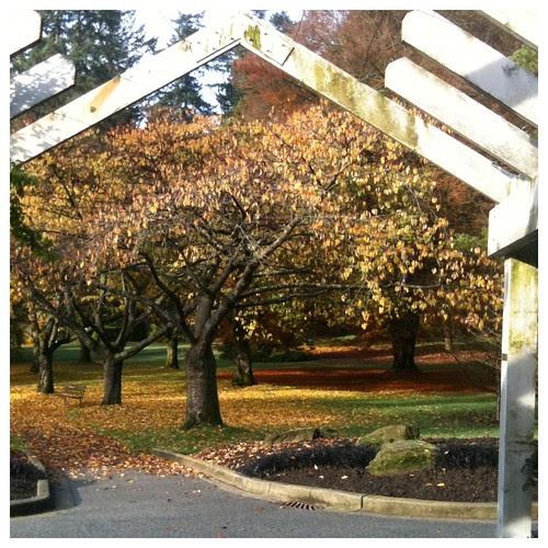 Rose Garden in Autumn by Ayala Moriel
