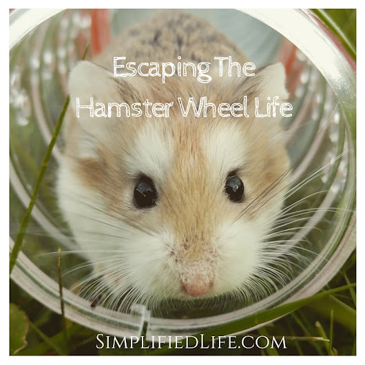 Escaping the Hamster Wheel of Life | Project Gapyear