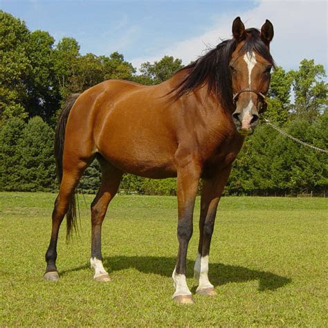 gambar kuda lengkap kumpulan gambar lengkap