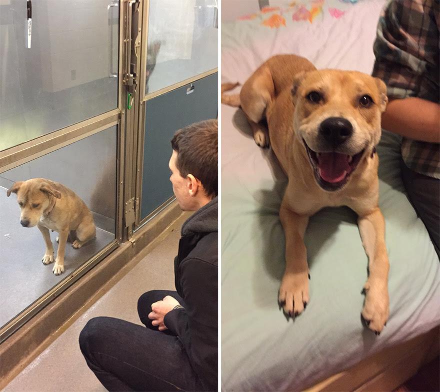 mascotas-adoptadas-antes-despues (2)