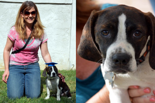 Escondido-Oceanside|Puppy-Socialization-Class|Group-Basic-Obedience|