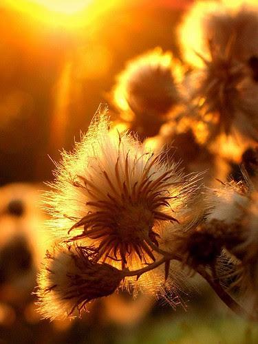 Feliz Quarta Sunset!!! by Menina Prendada -