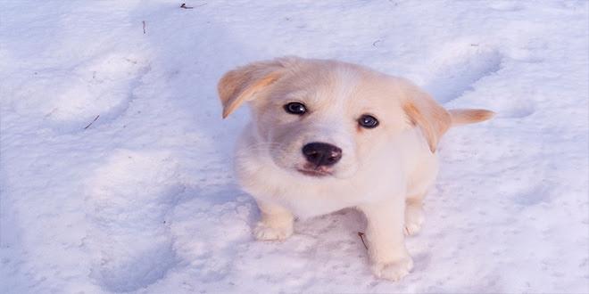 8 cosas que hacen a tu perro infeliz, aunque no te lo imagines