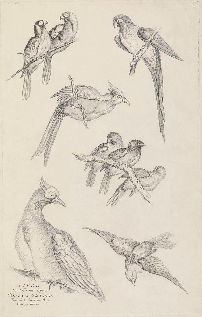 title page bird engravings by Huquier 1730s