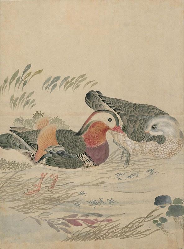 Ink + Watercolour  Bird sketch n