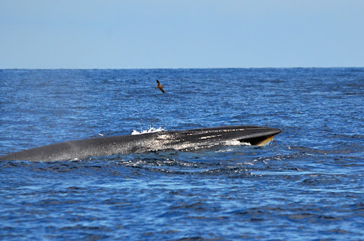 Thar she blows, whale and dolphin watching on Tenerife |