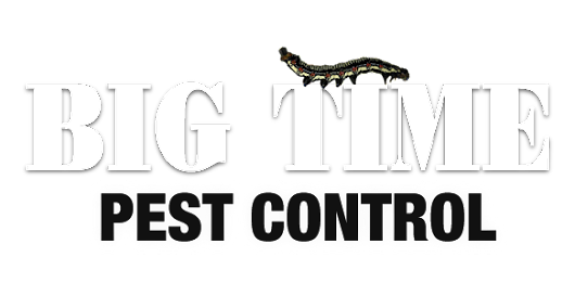 Pest Control in Redding, Eureka, Anderson & Chico, CA