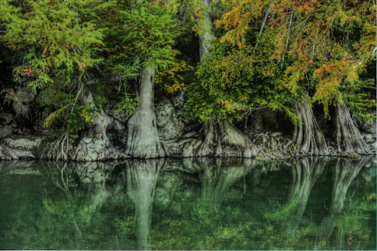 Guadalupe Trees -  A hauntingly beautiful HDR image