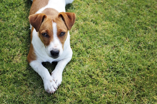 Why Do Dogs Bark? | Jaycliffe Kennels & Cattery News