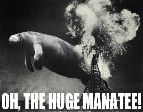 Manatee.  Big .. manatee by you.