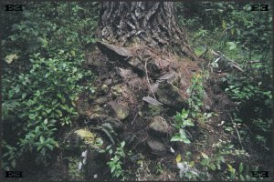 Waipoua Forest Stone City New Zealand collapsed ancient beehive houses dwellings structures