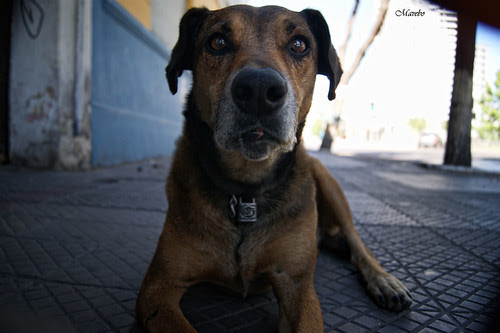 El perrito candado, finalistas de la 5ta versión del concurso Maria Panes 2012. by Alejandro Bonilla