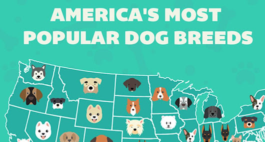 A Map of Every State's Most Popular Dog Breed