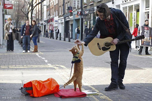 How A Stray Cat Turned A Homeless Busker Into A Best Selling Author
