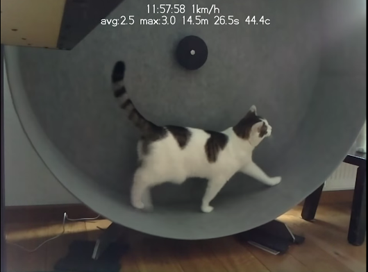 Cat exercise wheel - Raspberry Pi