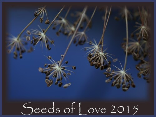 Seeds of Love : J-30