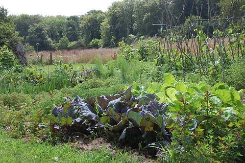 veg patch