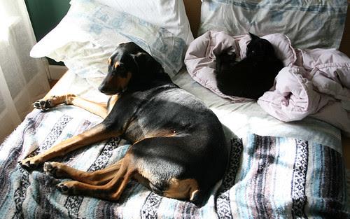 parallel pets: part 1