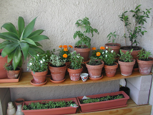 Complete Guide to Container Gardening - Homestead Backyard