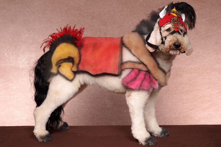 Penteados caninos bizarros 18