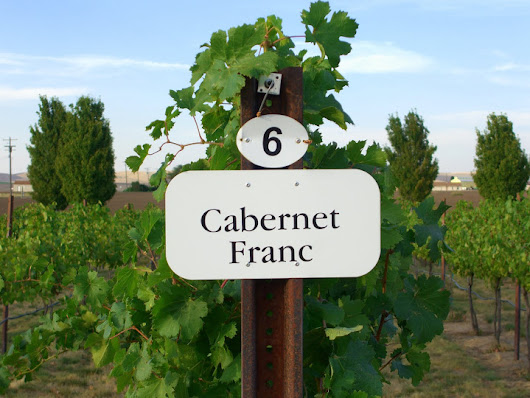 Cab Franc - The Next Big Grape