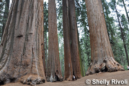 The 5 Best Places to Visit California's Giant Redwoods and Giant Sequoias