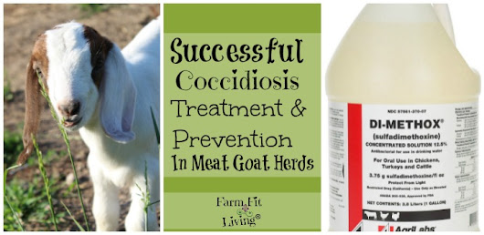 Successful Coccidiosis Treatment and Prevention in Meat Goat Herds | Farm Fit Living