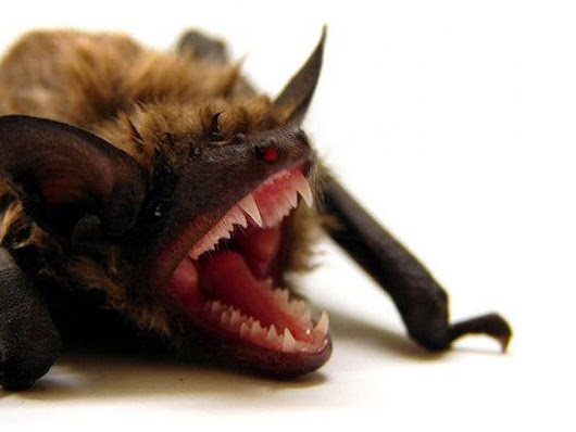 Rabid Bat Found in Oak Lawn