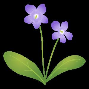 スミレの花イラスト3 花植物イラスト Flode Illustration フロデ