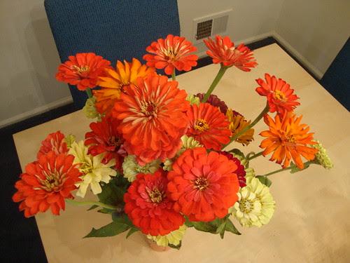 Princeton Farmers Market flowers this week