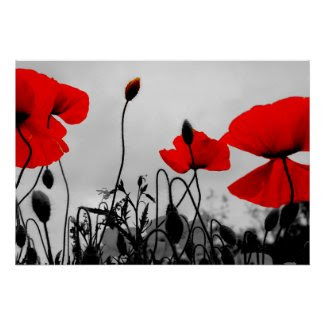 Red Poppies in the Field Poster Print print