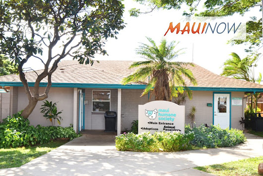 Maui Now: Maui Humane Society to Open 7 Days A Week